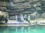 GW水族館4